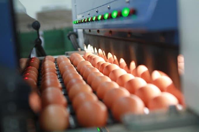 Trứng gà xuất khẩu