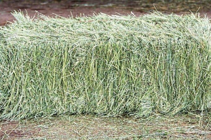 thủ tục nhập khẩu cỏ alfalfa